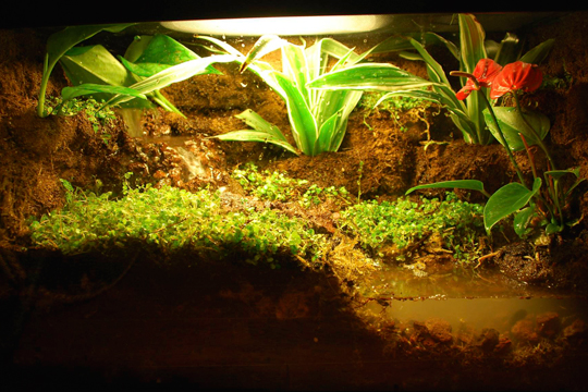 how to setup a reptile terrarium with live plants